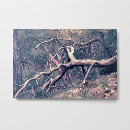 dead forest fallen trees x Metal Print