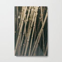 Bamboo Study 3 Metal Print