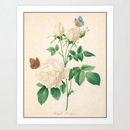Rose Flower Color Pencil Hand Drawing Art Print