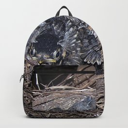 Baby robins in nest (fledglings) Backpack