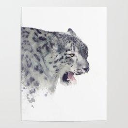 Snow leopard portrait watercolor on white background Poster