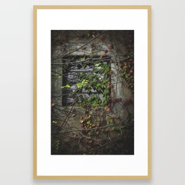 Vines Over a Window Framed Art Print