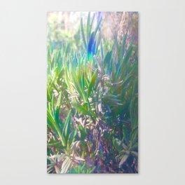 Lavender Love Canvas Print