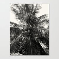 coconut wishes Canvas Prints featuring Coconut! by Chandon Photography