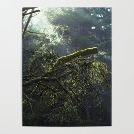 Into the green woods Poster