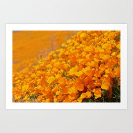 Golden Meadow of California Poppies in Bloom by Reay of Light Photography Art Print