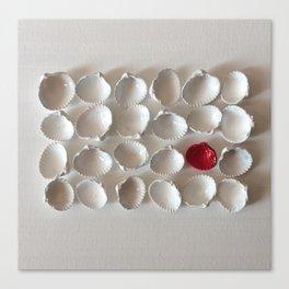 White seashells on white background Canvas Print
