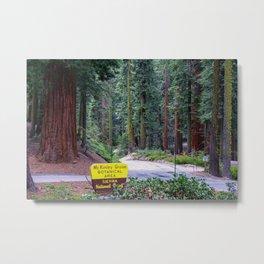 McKinley Grove Botantical Area, Sierra National Forest, California Metal Print