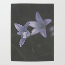 Botanical Still Life Photography Lily Wildflower Poster