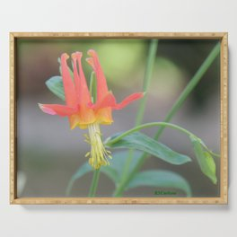 Pastel Columbine Afternoon Serving Tray