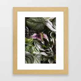 Moody Plants  |  The Houseplant Collection Framed Art Print