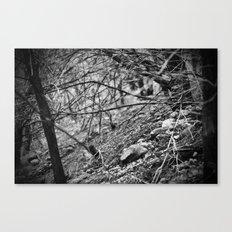 deer trails Canvas Print