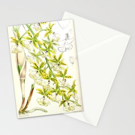 A orchid plant - Vintage illustration Stationery Cards