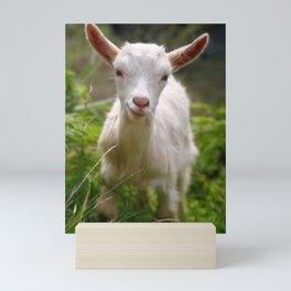 Baby goat Mini Art Print