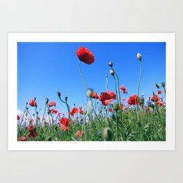 poppy flower no17 Art Print