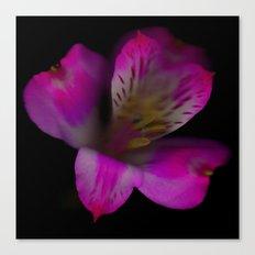 Flower 8 Canvas Print