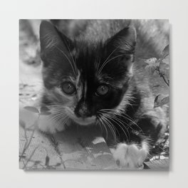 kitty watching Metal Print