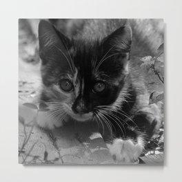 kitty watching Metal Print