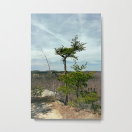 Tree II, Courthouse Rock Trail, Red River Gorge, KY. 2015 Metal Print
