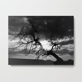 But Soft What Light Through Yonder Tree Breaks? Metal Print
