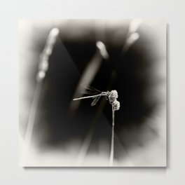 Dragonfly on Dried Plant Monochrome Grainy Smudge Metal Print