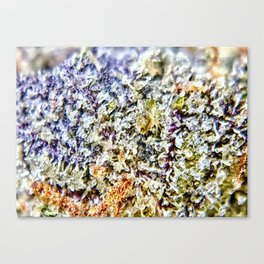 Purple Forum Cut Cookies Strain Resinous Amber Trichomes Dank Buds Close Up Canvas Print