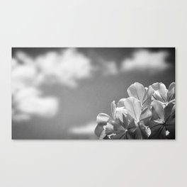 Bloom Where You Are Planted I - Nature Photography Canvas Print