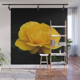 Golden Yellow Rose Isolated on Black Background Wall Mural