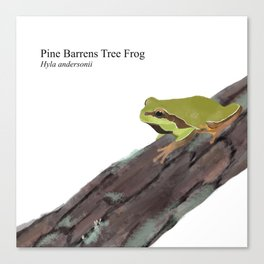 Pine Barrens Tree Frog (Hyla andersonii) on Pitch Pine Log Canvas Print