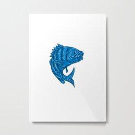 Sheepshead Fish Drawing Metal Print
