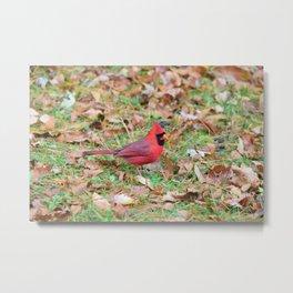 Autumn Leaves Cardinal Metal Print
