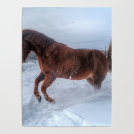 Fire and Ice - Equine Photography Poster