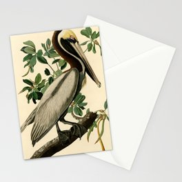 Brown Pelican (Pelecanus occidentalis) Scientific Illustration Stationery Cards