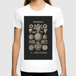 """""""Hexacoralla"""" from """"Art Forms of Nature"""" by Ernst Haeckel T-shirt"""