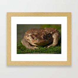 Toad 42 Framed Art Print