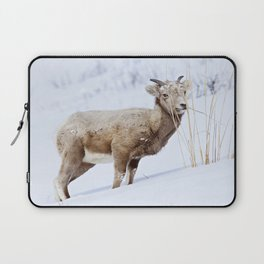 Big Horn Sheep in the Snow Laptop Sleeve