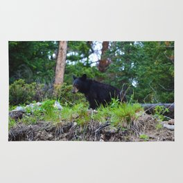 Young bear in Jasper National Park Rug