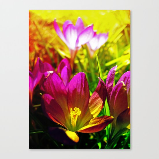 the day after Canvas Print