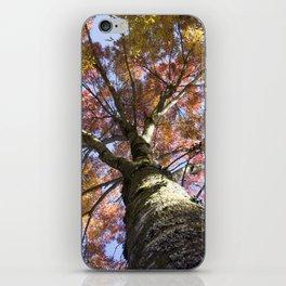 Beautiful Trees / 15 iPhone Skin