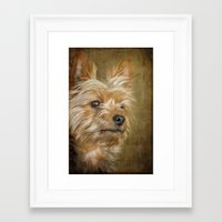 yorkie Framed Art Prints featuring Yorkie by CathyLICreations