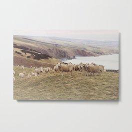 Sheep at the Coast Metal Print