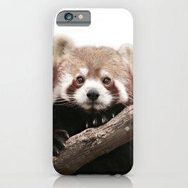 RED PANDA iPhone Case