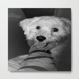 A Puppy's Smile Metal Print