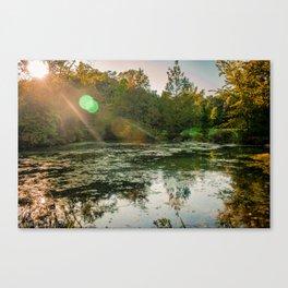 Bog Garden Canvas Print