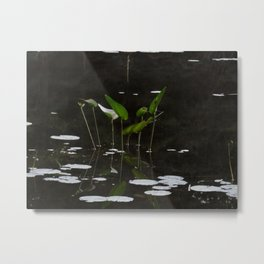 Pickerel Weeds and Lily Pads Metal Print
