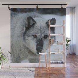 Lone wolf roams the Canadian Rockies Wall Mural