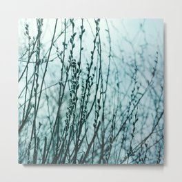 Teal Pussy Willows Dreamy Botanical Metal Print