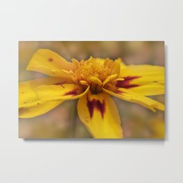 the beauty of a summerday -6- Metal Print