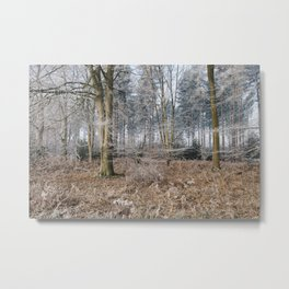 Woodland covered in frost. Norfolk, UK. Metal Print