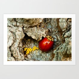 Spotless Lady Beetle Art Print